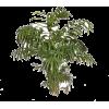 Plant - Niwi - Nature -