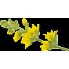 Plant Easter Spring Fling - Plants -