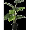Plant Leaf - Plants -