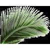 Plant Palm - Plants -