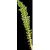 Plant - 植物 -