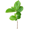 Plant Green - 植物 -