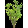 Plant Green - Pflanzen -
