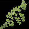 Plant Green - Rośliny -