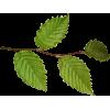 Plant Green - Растения -