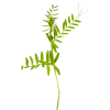 Plant Green - Plantas -