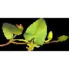 Plant Green - Plants -