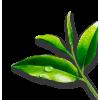 Plant - Растения -