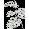 Plant - Rastline -