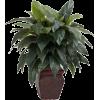 Plant - Biljke -