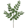 Plant - Plants -