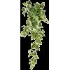 Plant - Piante -