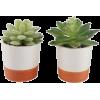 Plant - Rośliny -