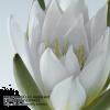Plant - Background -