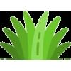 Plant - Uncategorized -