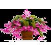 Plants - Plants -