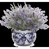 Plants - Plantas -