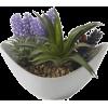 Plants - 植物 -