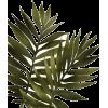 Plants - Rośliny -