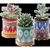 Plants bohemian - Plants -