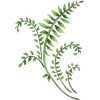Plant stencil - Illustrations -