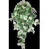 Plant vine - Plants -