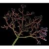 Png Ariel - Plantas -