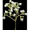 Png Ariel - 植物 -