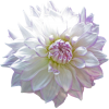 Png Ariel - Plants -
