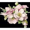 Png Ariel - Rośliny -