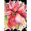 Poinsettia - Illustrazioni -