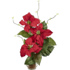 Poinsettia - Plants -
