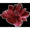 Poinsettia - Plantas -