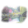 Pond - Natura -