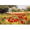 Poppy Field - Natureza -