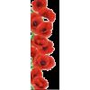 Poppy flower - Plants -