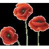 Poppy flower - 植物 -