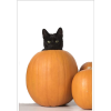 Poster Print of CAT. Black cat in a pump - Animales -