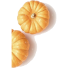 Pumpkin - Plants -
