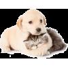 Puppy and Kitten - Animals -