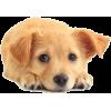 Puppy - Animals -