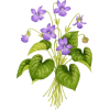 Purple Flowers - Plants -