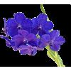 Purple Orchid - Plantas -