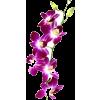 Purple Orchid - Plants -