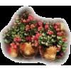 Qiou - Plants -