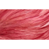 Red Background - Fundos -