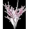 Red Bud Branch - Plants -