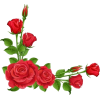 Red Rose Corner - Biljke -