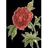 Red Rose Flower - Živali -