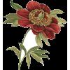 Red Rose Flower - Plants -